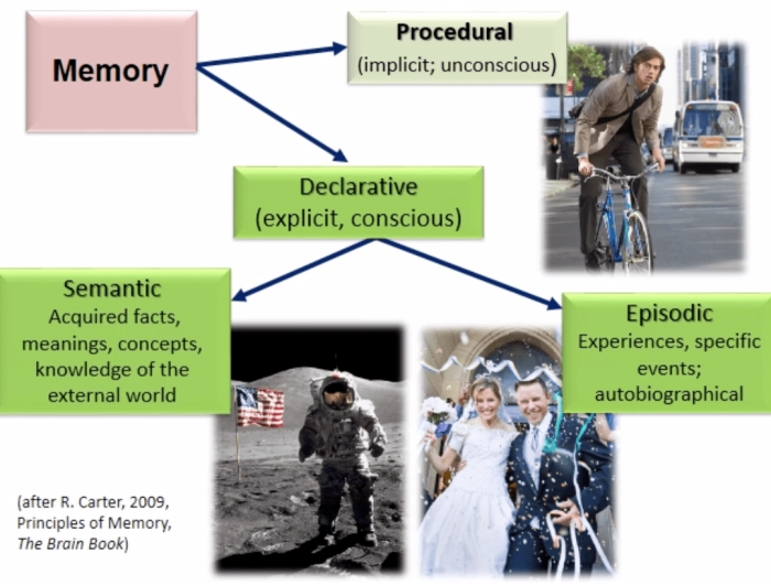 Kinds of memory, including procedural and declarative and based on R. Carter, 2009, The Brain Book
